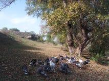 turkeys family Royalty Free Stock Image