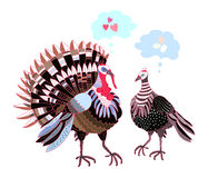 Turkeys Royalty Free Stock Images
