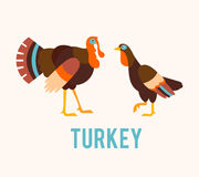 Turkeys in a flat style. Royalty Free Stock Photos
