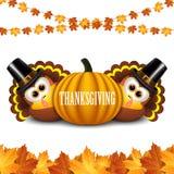 Turkeys for Thanksgiving Stock Photos