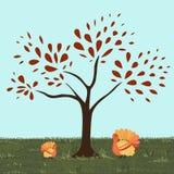 Turkeytree Stock Photo