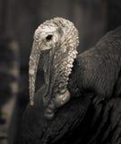 Turkiet Arkivfoton
