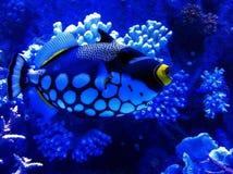 Turkiet Antalya akvarium Royaltyfria Foton