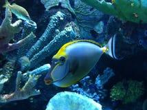 Turkiet Antalya akvarium Arkivfoton