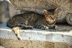 Turkiet Ephesus, en katt (Feliscatus) fördärvar in av det forntida ROM-minnet Royaltyfria Bilder
