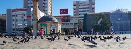 Turkiet historiska byggnader med fåglar royaltyfri foto