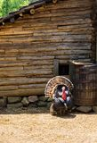 Turkiet i en lantgårdpenna på bookeren T Washington Monument Fotografering för Bildbyråer