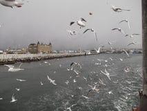Turkiet Istanbul arkivbilder