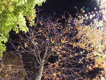 Turkiet istanbul natt Arkivbilder