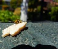 Turkiet som äter Wasp Royaltyfri Fotografi