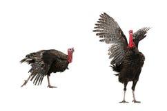 Turkije Stock Afbeeldingen