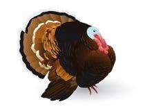 Turkije vector illustratie