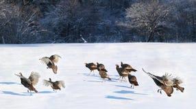 Turkije tijdens de winter royalty-vrije stock fotografie