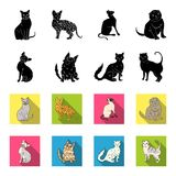 Turkish Angora, British longhair and other species. Cat breeds set collection icons in black,flet style vector symbol. Stock illustration Royalty Free Stock Photos