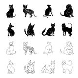 Turkish Angora, British longhair and other species. Cat breeds set collection icons in black,outline style vector symbol. Stock illustration Stock Photo