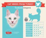 Turkish Angora Cat breed  infographics Royalty Free Stock Photo