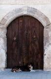 Turkish dog secures door Stock Photography