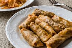 Turkish Dolma Lahana Sarmasi / Cabbage Rolls. Royalty Free Stock Images