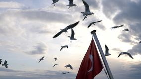 Turkish flag and flying seagulls on sea background. stock footage