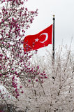Turkish flag in tree blossoms in spring - Turkey Royalty Free Stock Photo