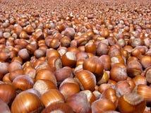 Turkish Hazelnuts Royalty Free Stock Image