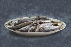 Turkish horse mackerel fishes. Detailed photo of Turkish horse mackerel fishes laying in a plate Royalty Free Stock Photos