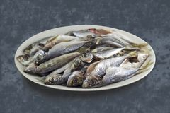 Turkish horse mackerel fishes in a plate. Detailed photo of Turkish horse mackerel fishes are laying in a plate Royalty Free Stock Image