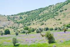 Turkish landscape Royalty Free Stock Images