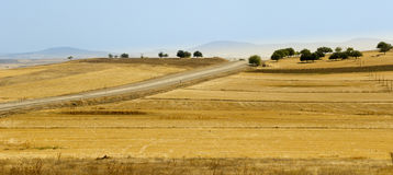 Turkish landscape. Sunny panorama of the Turkish Interior Royalty Free Stock Images