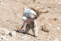 Turkish peasant woman collecting firewood. In rural  Turkey Royalty Free Stock Photos