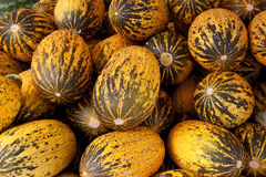 Turkish sugar melons Stock Images
