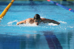 Turkish Swimming Championship. ISTANBUL, TURKEY - AUGUST 15, 2015: Unidentified competitor swims at the Turkcell Turkish Swimming Championship in Enka Sports Royalty Free Stock Photography