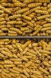 Turkish wheat Stock Image