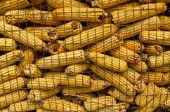 Turkish wheat Stock Images