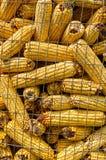 Turkish wheat Royalty Free Stock Image