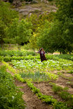 Turkish Woman Farming Stock Photo