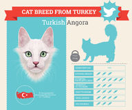 Turkisk angora- kattavelinfographics vektor illustrationer
