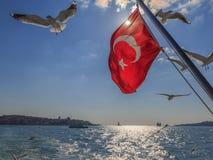 Turkisk flagga med flygseagulls Fotografering för Bildbyråer