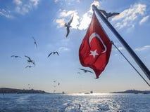 Turkisk flagga med flygseagulls Royaltyfria Bilder