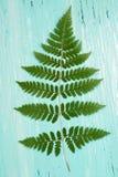 Turkoois houten raad en varenblad Royalty-vrije Stock Foto's
