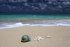Turkooise oceaan van het overzeese shell zeester de zandige strand Stock Fotografie