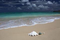 Turkooise oceaan van het overzeese shells zeester de zandige strand Royalty-vrije Stock Afbeelding