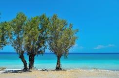 Turkooise overzees en bomen Royalty-vrije Stock Afbeeldingen
