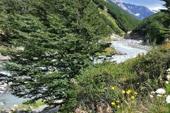 Turkooise stroom, gele bloemen en madeliefjes op w-Trek in Torres del Paine NP in Patagonië, Chili Stock Foto's