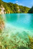 Turkos sjö med fiskar, Plitvice sjönationalparken arkivbild