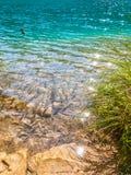 Turkos sjö med fiskar, Plitvice sjönationalparken royaltyfri bild