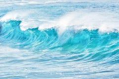 Turkos vinkar på Sandy Beach, Hawaii arkivfoto