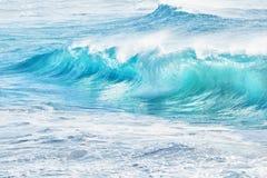 Turkos vinkar på Sandy Beach, Hawaii fotografering för bildbyråer