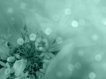 Turkos-vit blomma på den suddiga bokehbakgrunden Närbild alla några objekt för den blom- illustrationen för sammansättningselemen Royaltyfri Bild