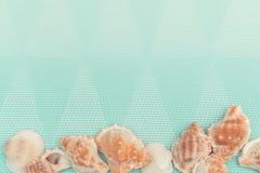 Turkosbakgrund med havsskal unga vuxen människa royaltyfri foto